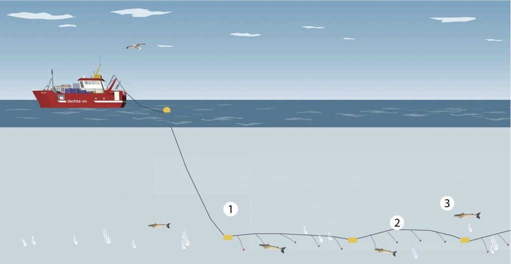 Longlining is a fishing technique where a horizontal main line floats horizontally with vertical lines dangling from it, each of which has a baited hook to catch large, deep-sea fish such as sharks. Graphic by Good Fish Bad Fish.