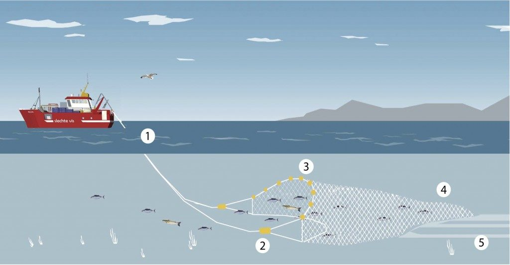 Trawl fishing is a fishing method where a large funnel-shaped net is dragged across the sea floor or the mid-water column. This method results in large by-catch and damages the seabed as well. Graphic by Good Fish Bad Fish.