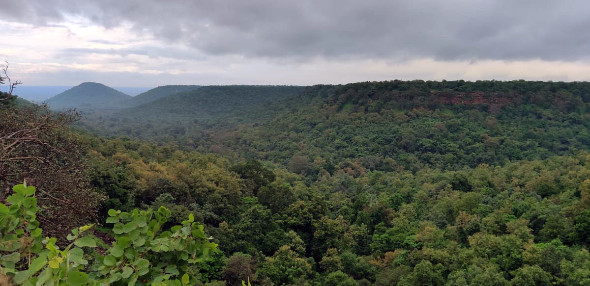Panoramic view of Kuno Palpur Wildlife Sanctuary. The current carrying capacity of the area is a maximum of 40 lions. Photo by Anup Dutta.