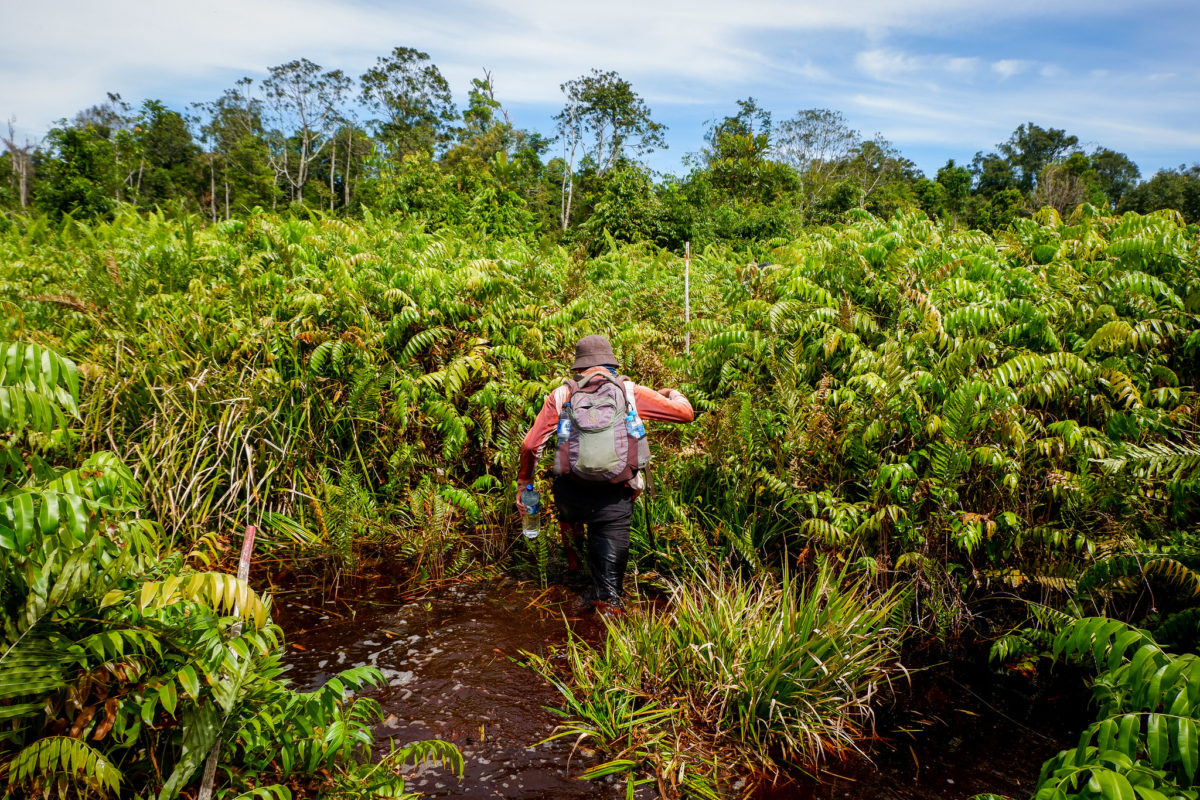 Peatlands are crucial carbon sinks but they are not on the map
