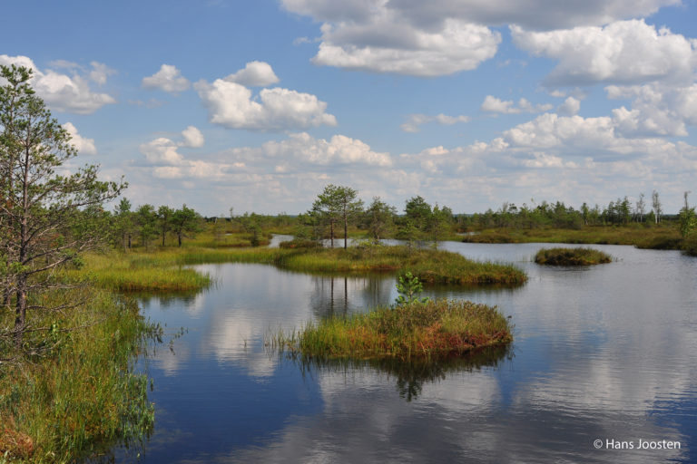 Peatlands are found over 180 countries but their exact extent, location and status are not relatively known. Photo by Hans Joosten.