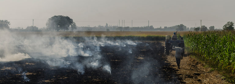 Stubble burning is an economical way for many farmers to deal with post-harvest stubble.  Source Saagnik Paul/Greenpeace.