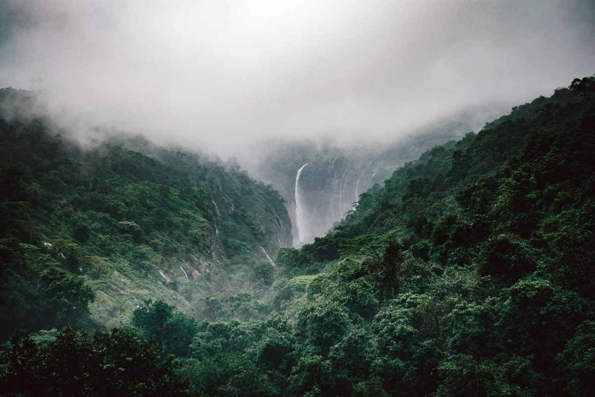 India has a long term goal of having 33 percent of its geographical area under forest cover. Photo from Unsplash.