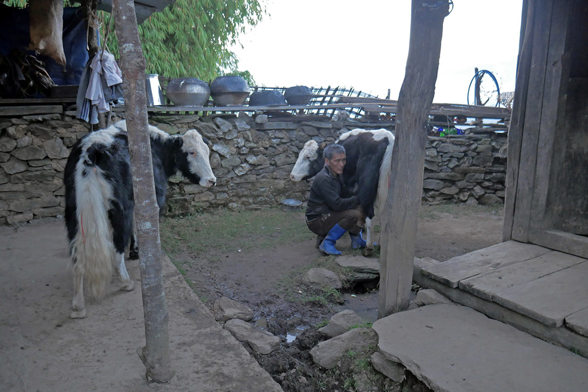 Yak not only provides milk and meat to the Brokpa, but these reclusive herders make various items such as ropes and baskets and warm clothes from yak skin and fur.