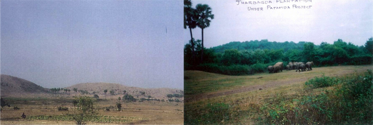(L) A view of the barren mountain in 1996 and (R) a restored landscape as seen in 2006.