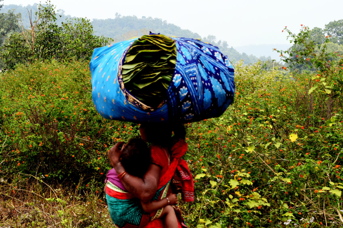 A Kutia Kandha tribe member carries siali leaves from the forest, a major source of livelihood. Photo by Basudev Mahapatra.