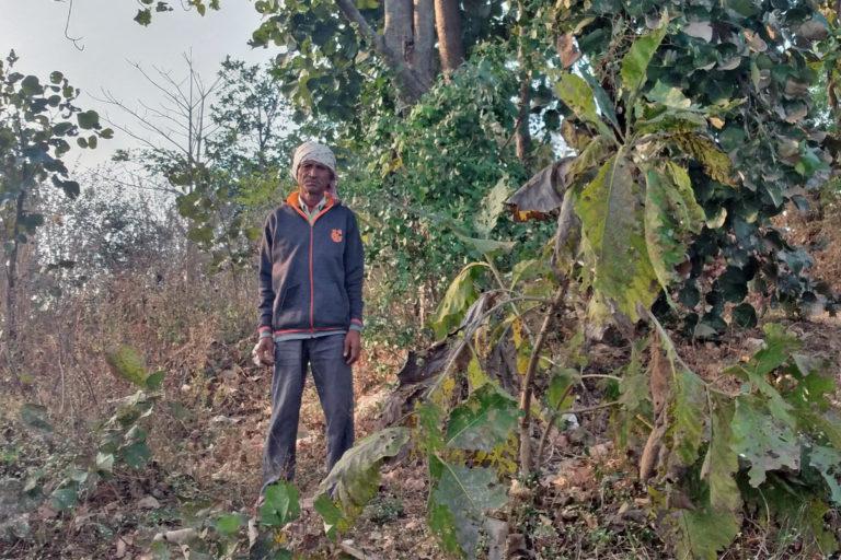 Sacred groves of Jhabua in Madhya Pradesh are held in high regard by the local communities. Photo by Sahana Ghosh/Mongabay.