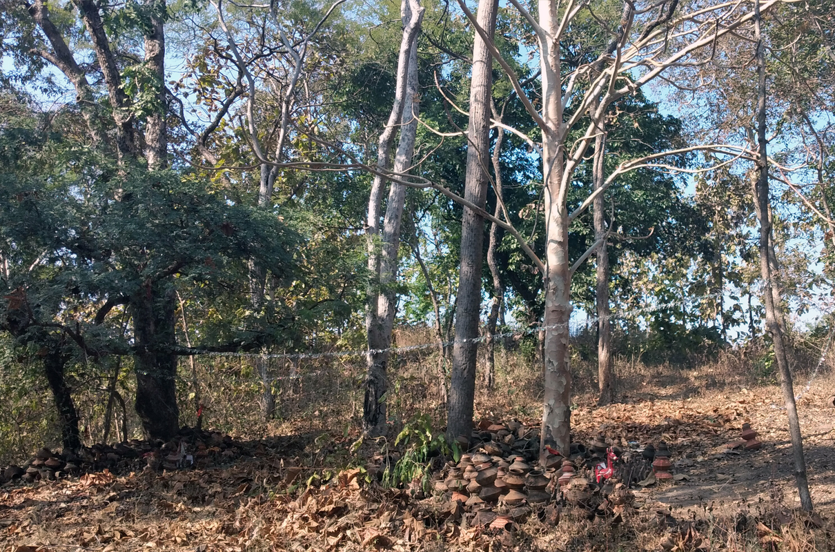 A sacred grove in Jhabua, Madhya Pradesh with clay pots and other traditional items on the forest floor. Sacred groves and tribal beliefs are threatened by illegal tree felling and encroachment. Photo by Sahana Ghosh/Mongabay.