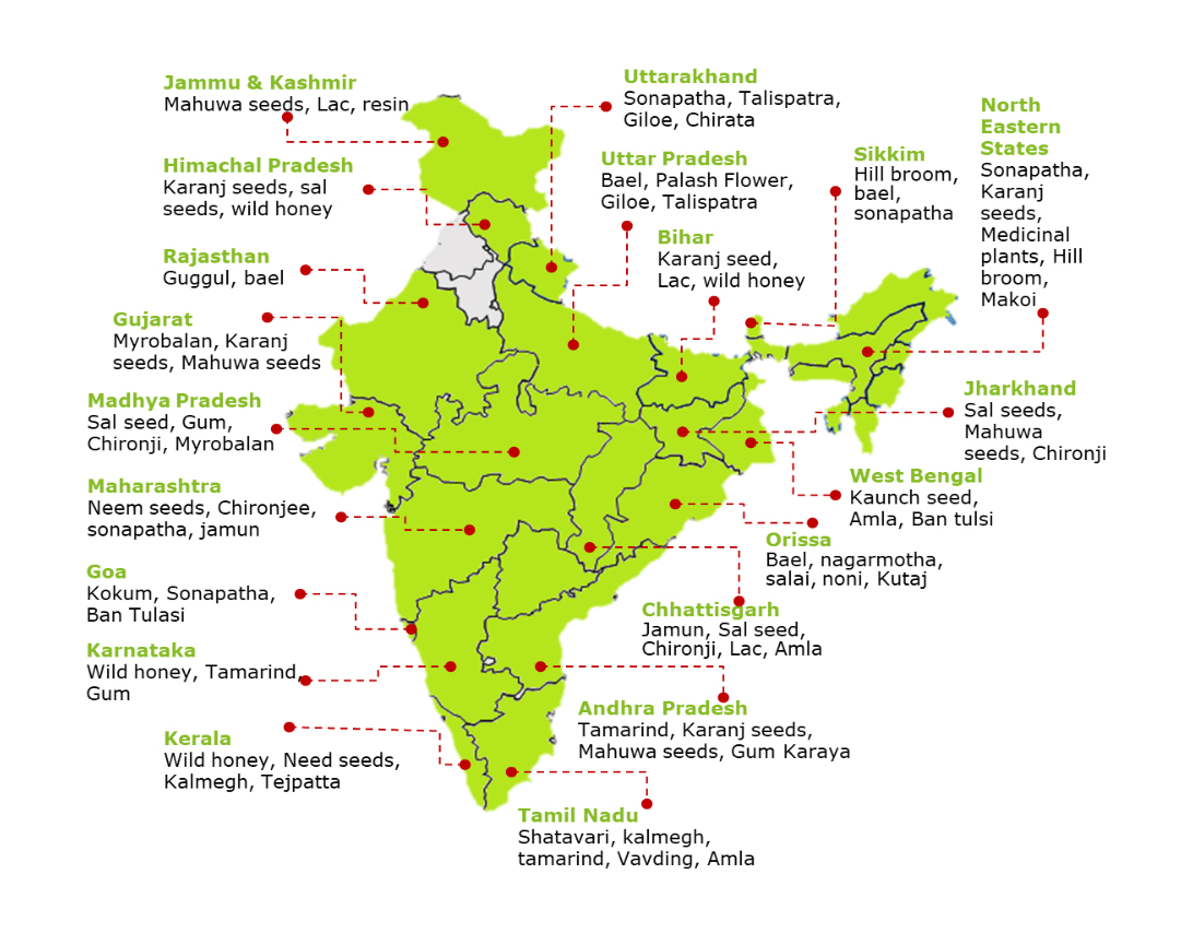 State-wise availability of NTFPs. Map from Ministry of Tribal Affairs, Government of India.