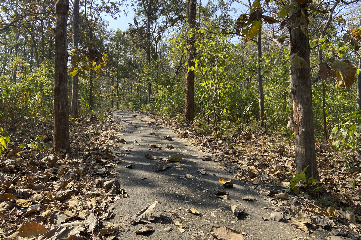 A trail inside Dang forests that belongs to the dry and mix deciduous forests type largely dominated by teak forests. Photo by Kartik Chandramouli/Mongabay.