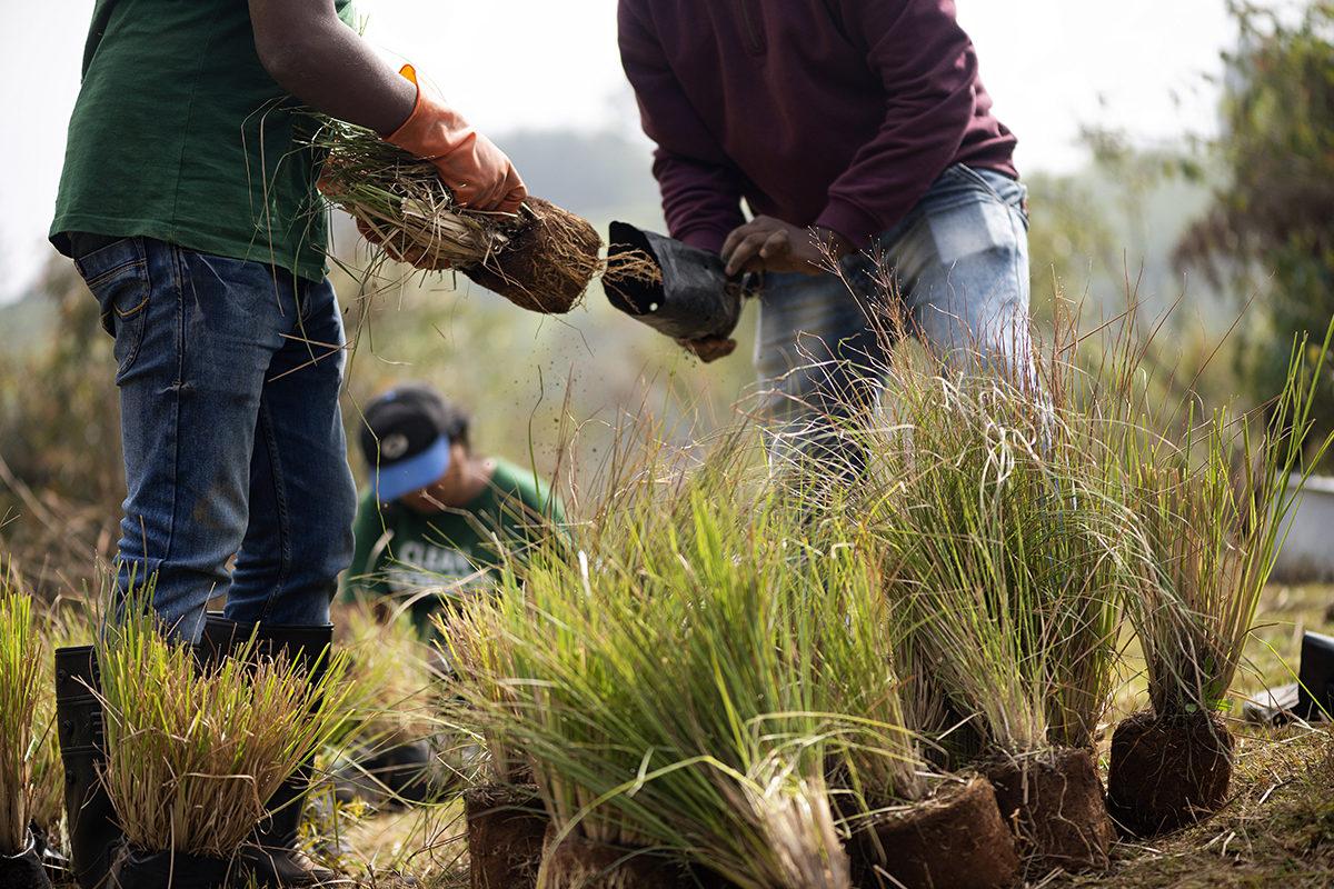 Ecotourism staff involved in propagating native grass in Nilgiris. Photo by Arjun Cheyyur.