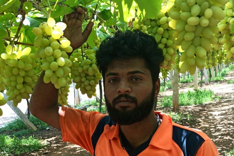 Dhananjay K.C. sold around 20 tonnes of grapes using social media during the lockdown. Photo from Dhananjay K.C.