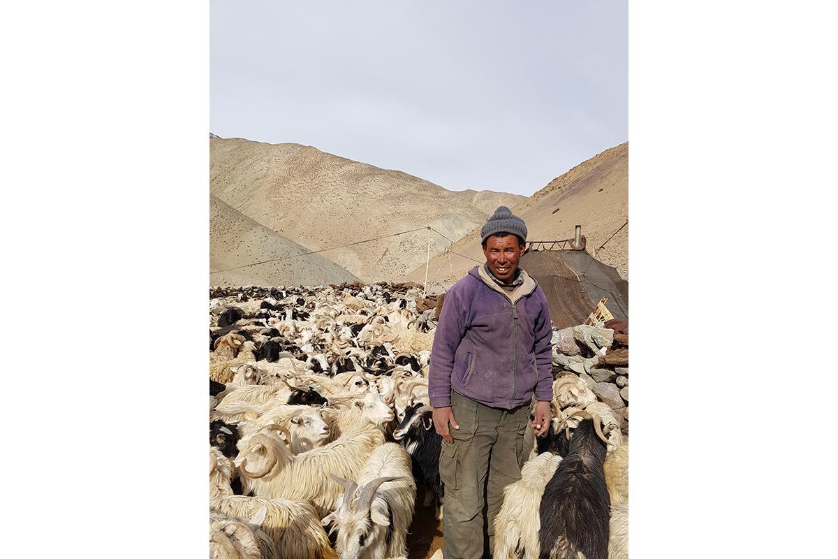 Accho Chozgyal, a Changpa herder in Ladakh with this his livestock. Photo by Munib Khanyari.