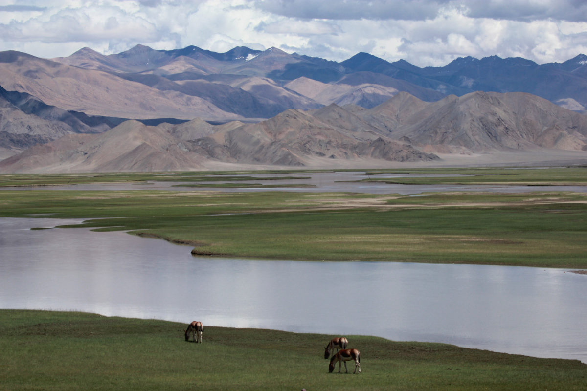 The vast expanse of the Indian Changthang in Ladakh. Photo by Rigzen Dorjay.