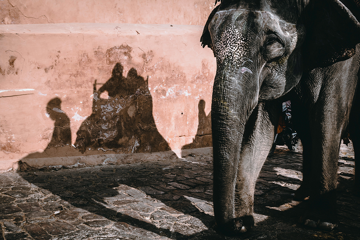 Many captive elephants are owned by individuals, tourist centres and institutions such as temples. Due to the COVID-19 lockdown, many of these animals across the country have been starving. Photo by Frank Holleman/Unsplash.