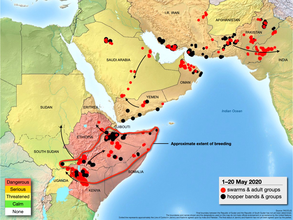 The spread of locust swarms from eastern Africa, across middle east towards India. Map by FAO.