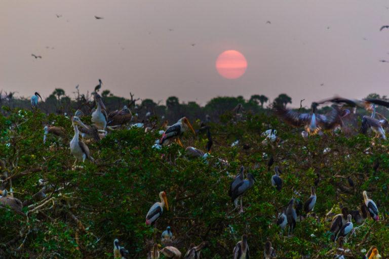 Vedanthangal Bird Sanctuary. Photo by Thangaraj Kumaravel/Flickr.