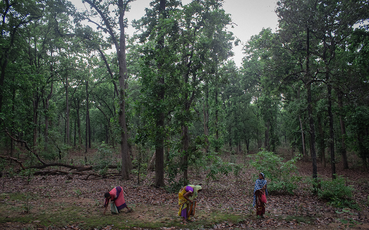 Women pick wild mushrooms or kukkud in Hasdeo forests for consumption and sale. Tribal communities form a majority of the population in the Hasdeo region that spans across multiple Chhattisgarh districts. Photo by Vaishnavi Suresh.