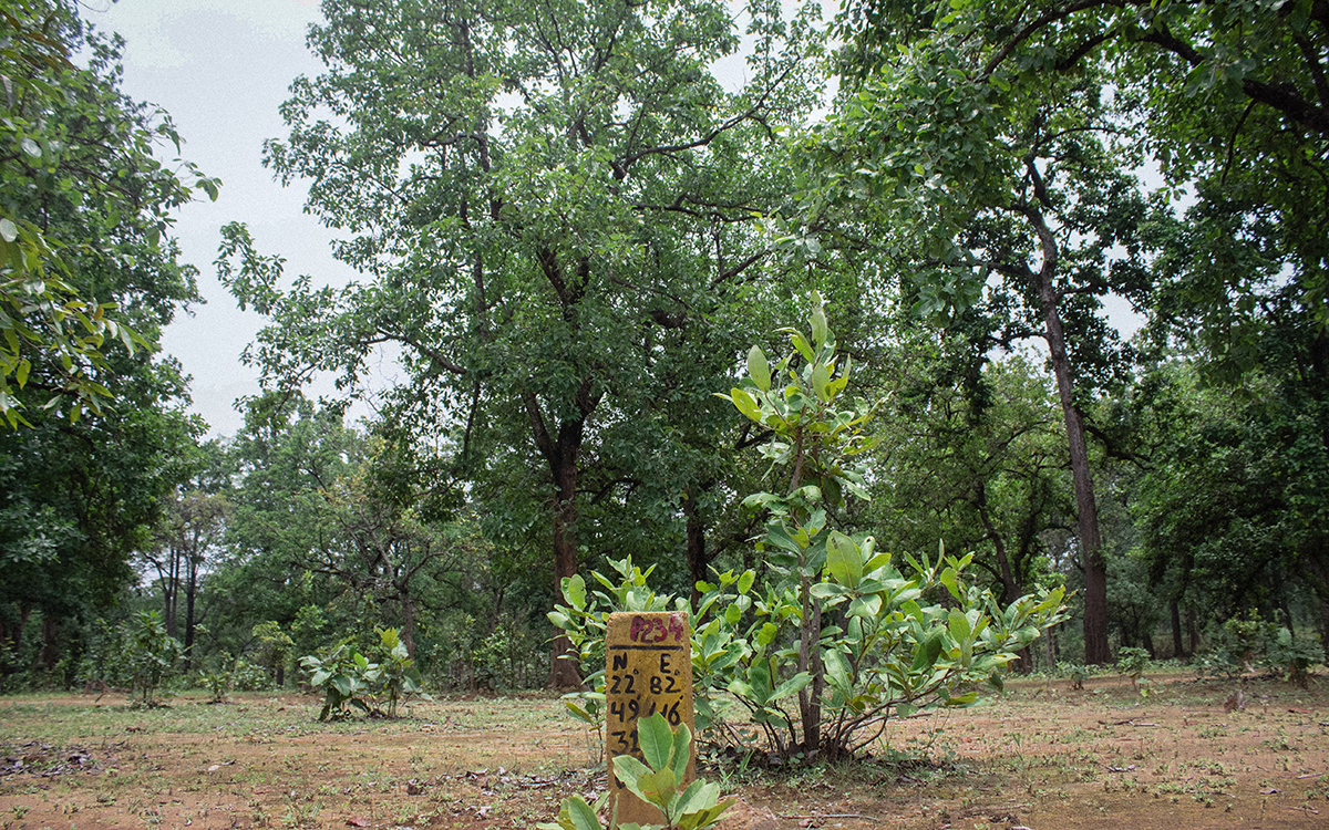 A marking in the Hasdeo forests indicating the region that will be dug out for a coal mine. Photo by Vaishnavi Suresh.