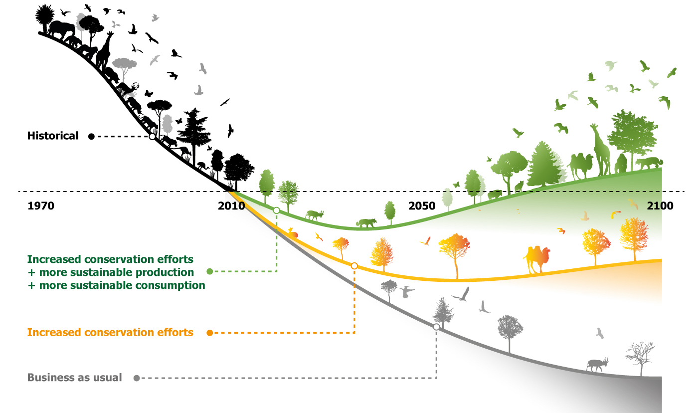 Bending the curve of biodiversity loss. Graphic from the Living Planet 2020 report.