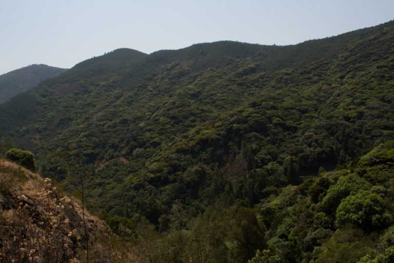 A high-altitude shola forest in the Western Ghats. Conserving such biodiversity is needed to protect the ecosystem services in the mountains and the plains. Photo by S. Gopikrishna Warrier/Mongabay.