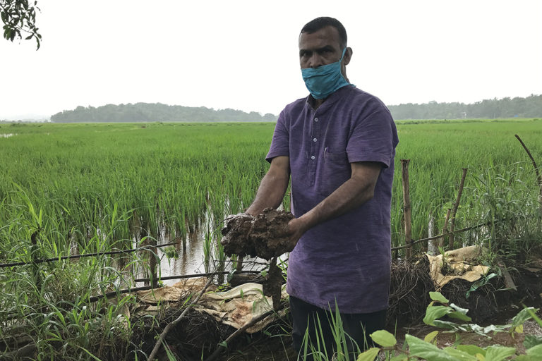 Sakaram Pednekar, a local farmer and activist, shows silt that has been choking paddy fields in Mayem village. Photo by Supriya Vohra.