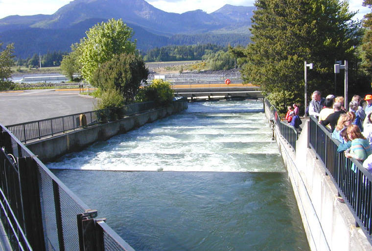 "Fish ladders such as this one, located at Bonneville Dam on the Columbia River, USA, allow migration of fish during different phases of their life cycle. Here are 60 1-foot steps of the ""ladder. Photo by Eric Guinther/ Wikimedia Commons."