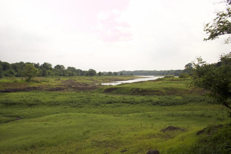 The Dumna Nature Reserve serves as green lungs for Jabalpur. Photo by Nikita Khamparia.