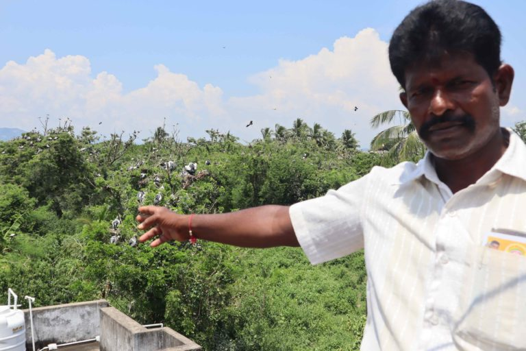 A Telukunchi resident showing the migratory birds nesting on trees outside his residence. Photo by Special Arrangement.