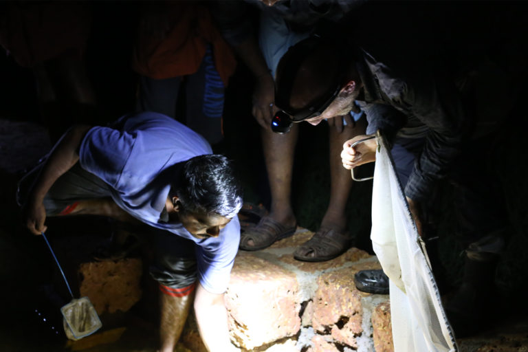 Rajeev Kuriyedath, a local community member, helping researchers locate and catch the Gollum snakehead in Kerala. Photo by Unmesh Katwate.