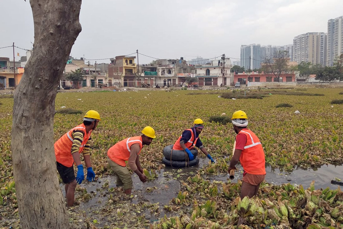 Volunteers working to revive pond clogged with water hyacinth, an invasive aquatic plant, in Jalalpur village. Photo from Ramveer Ranwar.