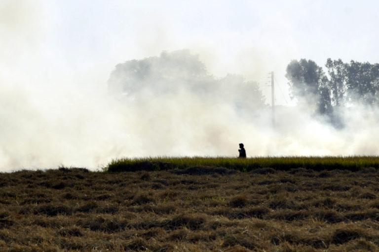 A farmer burning paddy stubble in Bucho Mandi in Bathinda district