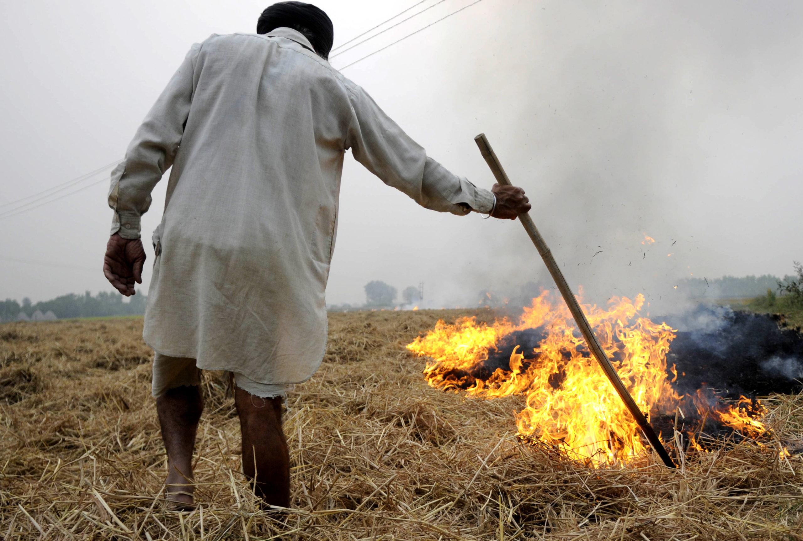 Farmer Burning Paddy Stubble at Sanour village near Patiala. Photo by special arrangement.