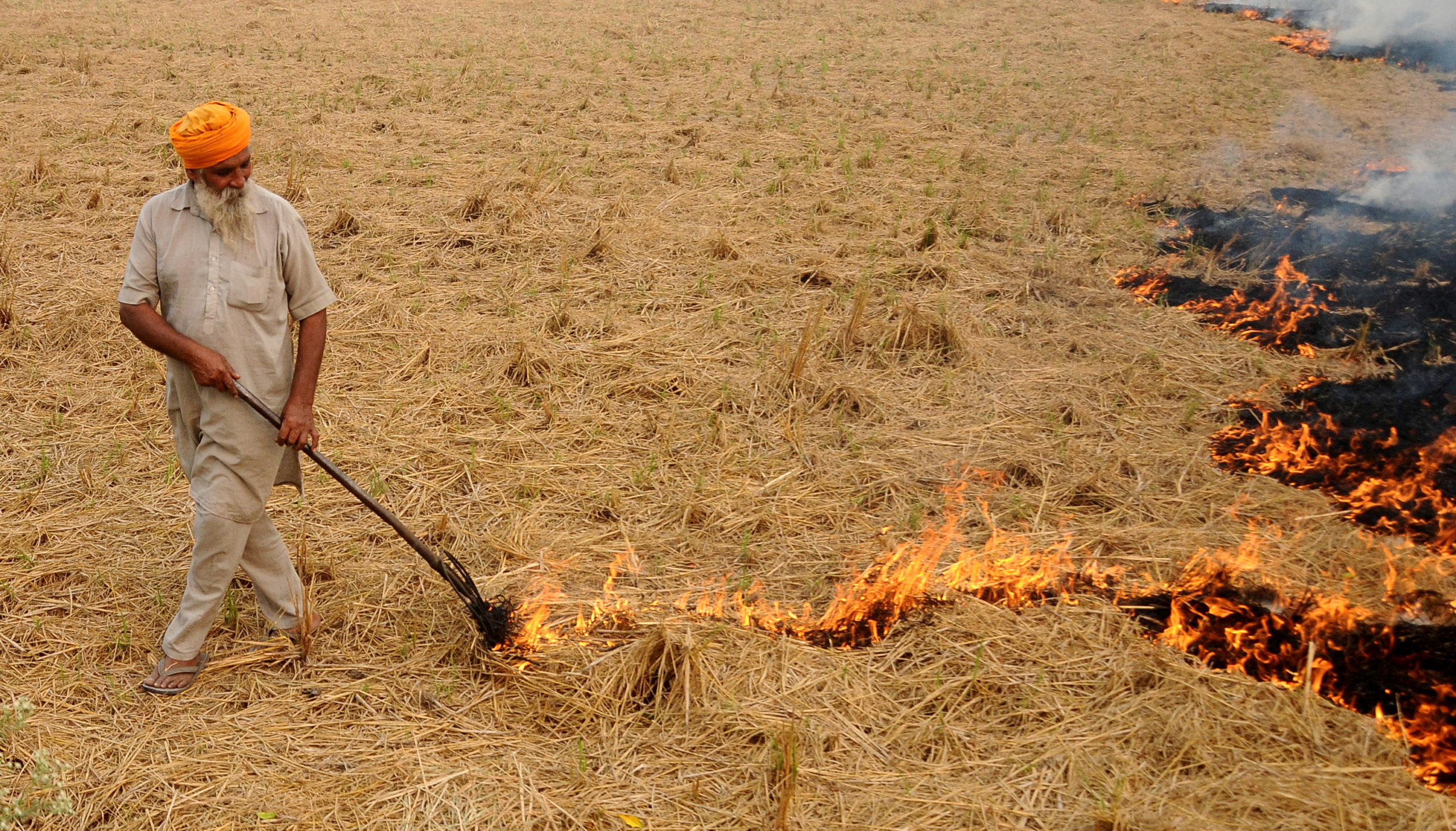 Farmer Burning Paddy Stubble at sanour village near patiala. Photo by special arrangement.