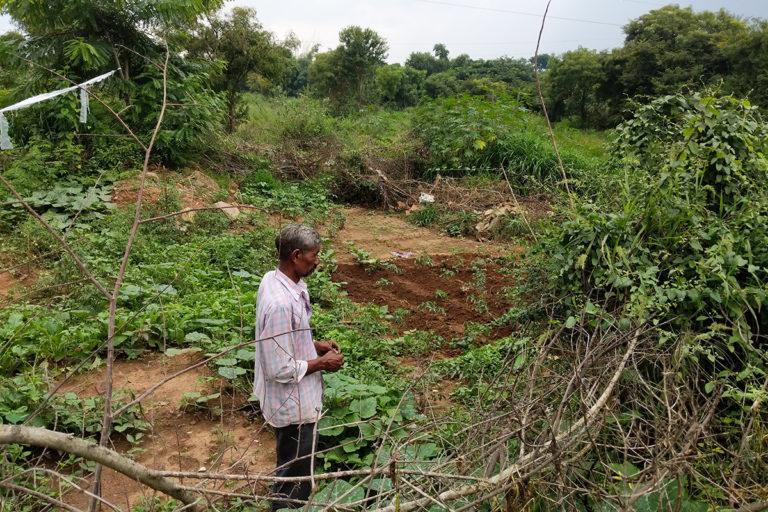 Nagaraj Obanna at Doddabidarikallu katte, where he grows tomatoes and other vegetables. Photo by Mohit M. Rao.