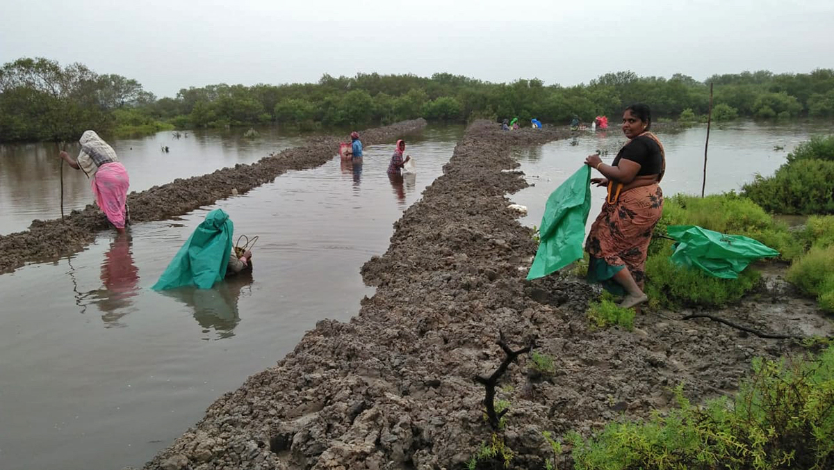 Women from the community digging canals and planting mangrove saplings to restore the habitat. Photo by Sankar.