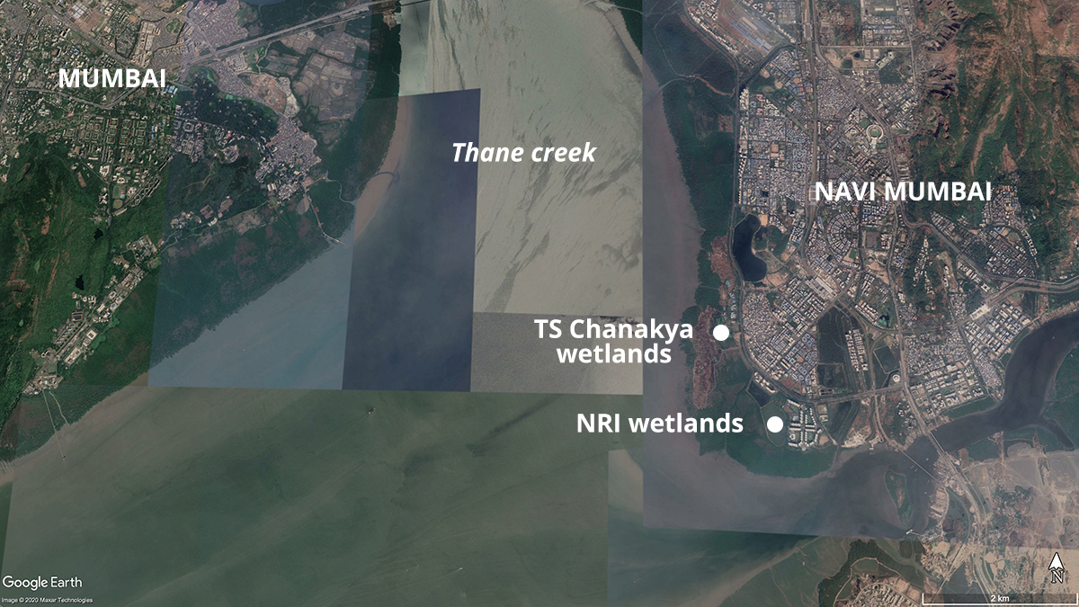 Mangroves and mudflats line Mumbai and Navi Mumbai's coast. Map from Google Earth.