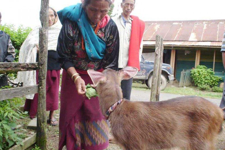 A community member feeding a baby sambar at Sendenyu. Photo from Sendenyu Community Biodiversity and Wildlife Reserve.