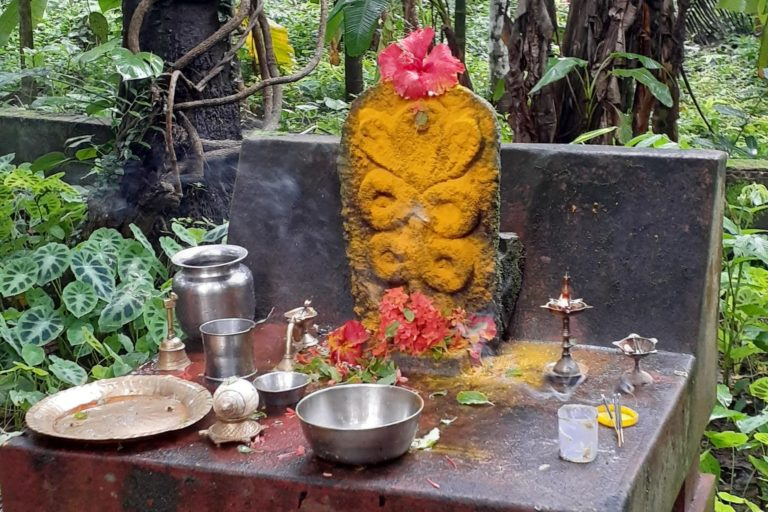Worshipping rituals of serpent deities involves bathing them in different ingredients such as milk and turmeric for example. Photo by U. Prashanth Ballullaya.
