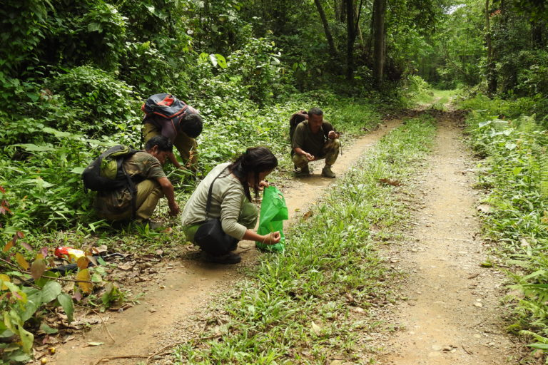 NCF field staff collecting seeds for their nursery that is part of their restoration work that has been ongoing since 2014. Photo by Aparajita Datta.