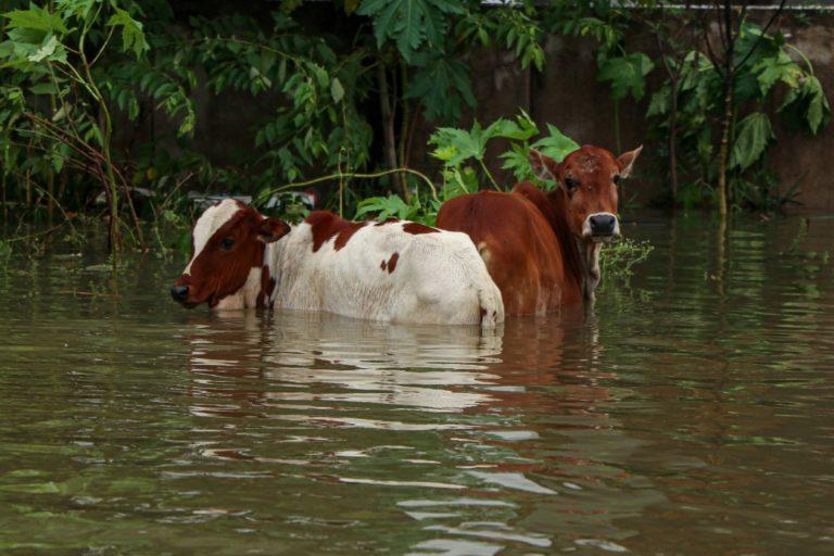 Several suburban areas such as Mudichur were flooded throughout the week. Photo by Adaleru Ramamoorthi