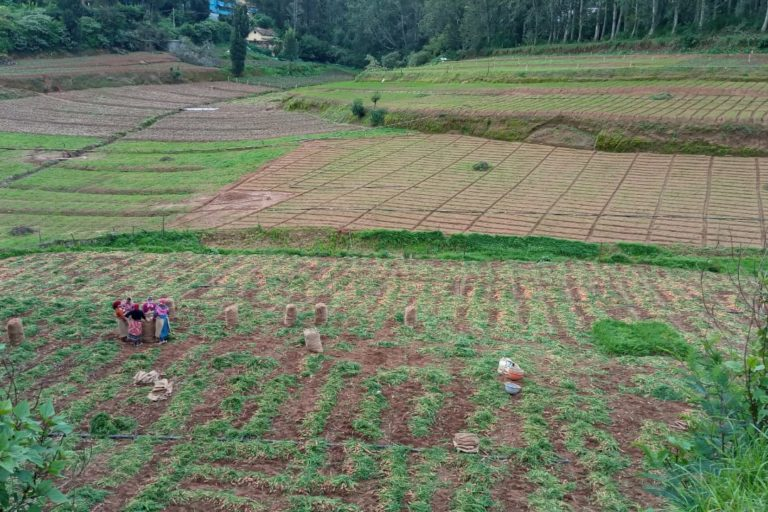 Vegetable farms in Thuthalai village which could be submerged due to the project. Photo by Mathimaran.