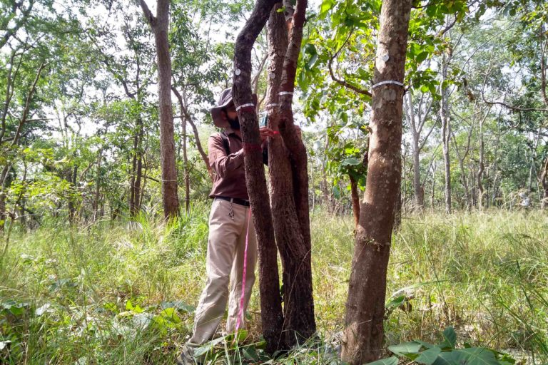 A data collector measuring tree girth in one of the long-term monitoring vegetation (LEMoN) plots in Telangana. Photo by Mittal Gala.