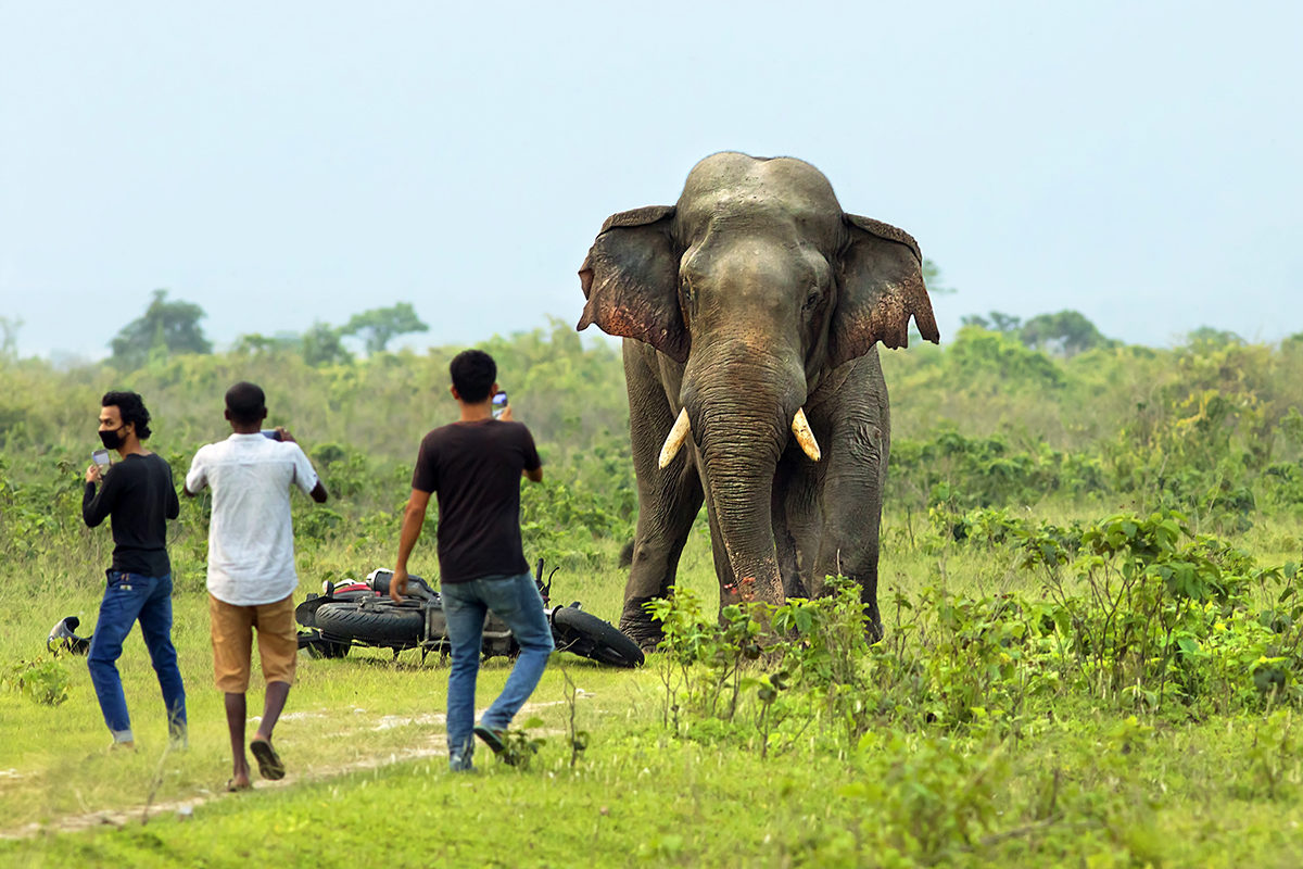 Heavily fragmented natural landscapes have caused human-animal conflicts in North Bengal. The barrier at the Indo-Nepal border obstructs elephant movement and has increased the conflicts of the Indian side. Photo by Avijan Saha.