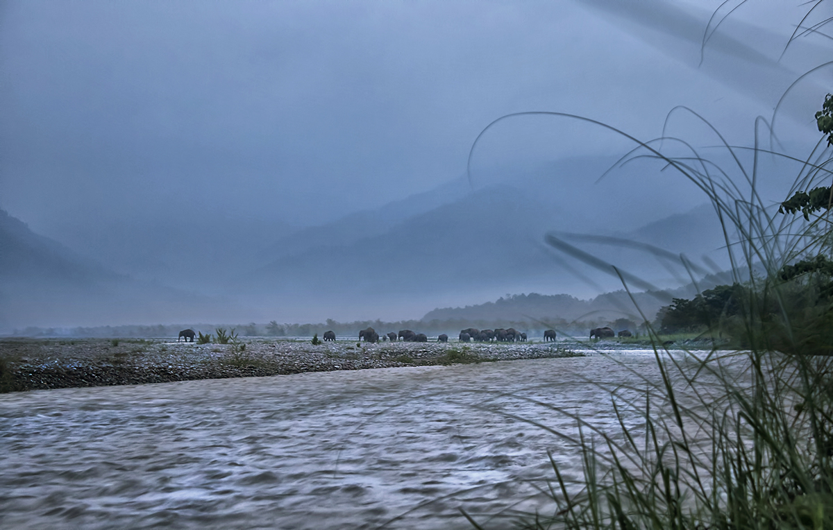 Elephant herds gather at the Mechi river before attempting to cross the Indo-Nepal border. Photo by Avijan Saha.