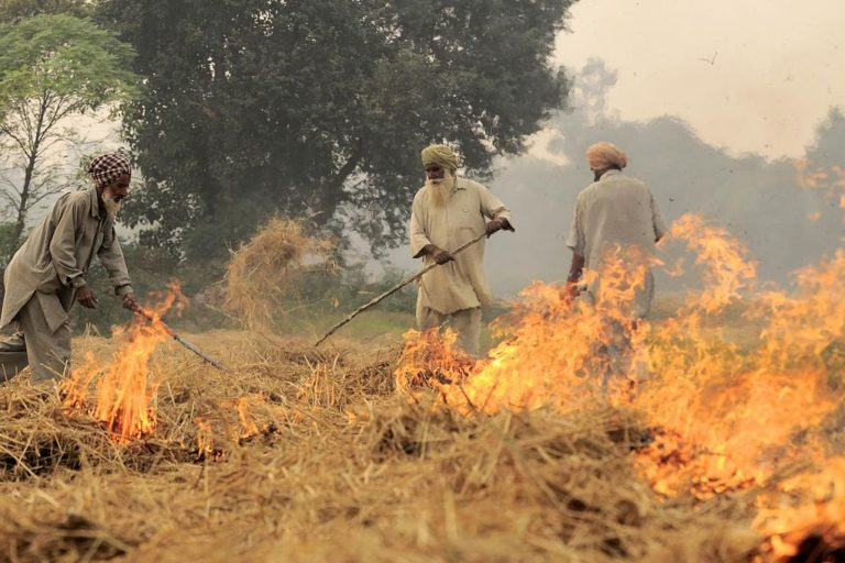 Farmers in Punjab set fire to paddy stubble at the end of the Kharif or monsoon sowing season. This is one of the major sources of air pollution that the Air Act did not envisage. Photo by Neil Palmer (CIAT)/Flickr.