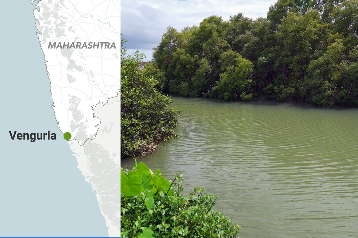 Vengurla taluka in Sindhudurg, the southernmost district in Maharashtra, where the Swamini group operates. The district covers only 3.8 percent of the total mangrove vegetation in the state. Map by Datawrapper and photo by Shweta Hule.