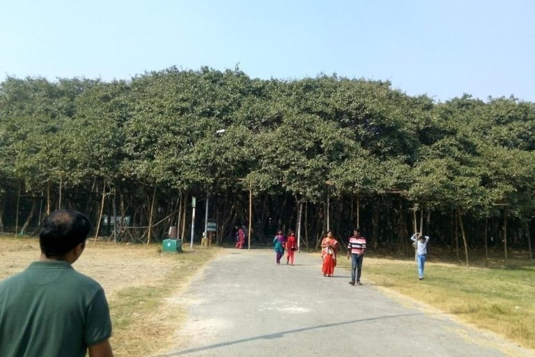 Banyan tree at Bhose village. Pic credit- Prakash Kantheshwarkar, resident