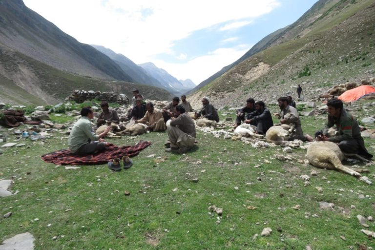 Livestock is the only source of income for a group of nomadic herders and their animals occupy potential markhor habitats. Photos from Wildlife Trust of India.