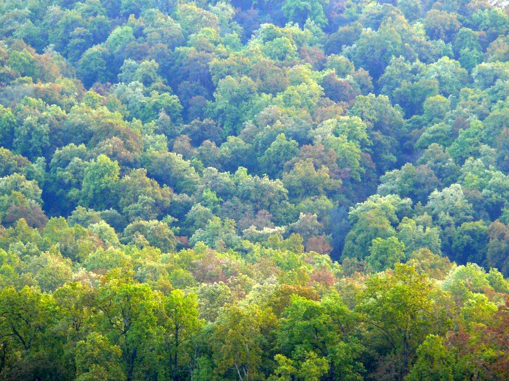 Sal forest landscape.jpg. Photo by Raman Kumar.
